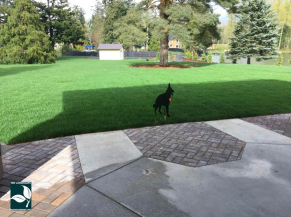 Auburn Landscaper