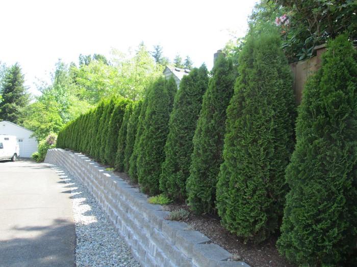 Fircrest Landscape Maintenance