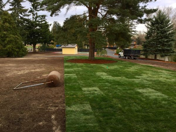 Grass Installation Orting