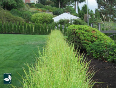 Landscape Maintenance University Place WA