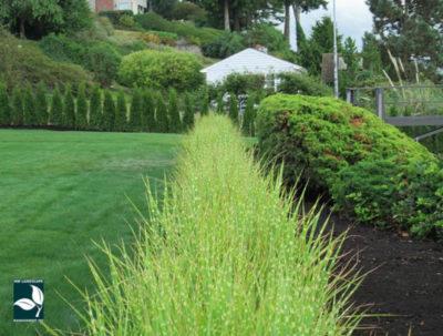 Tukwila Landscape Maintenance